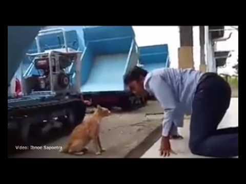 Pertarungan Sengit Kucing Spesies Baru